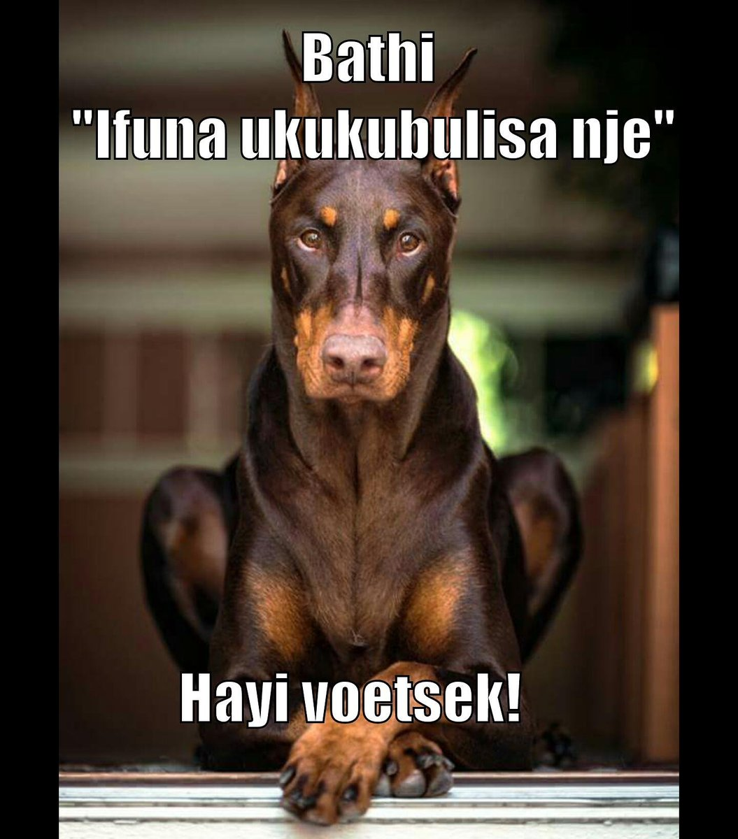 Xhosa Isixhosa Xhosamemes Southafrica Southafrican Meme Memes Funny Joke Jokes Humour Xhosajustkiddingpic Twitter Com Gdzhhwtly
