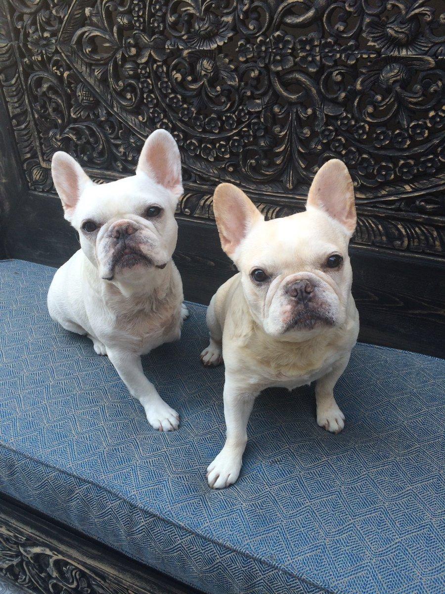 Ron whites dog sluggo