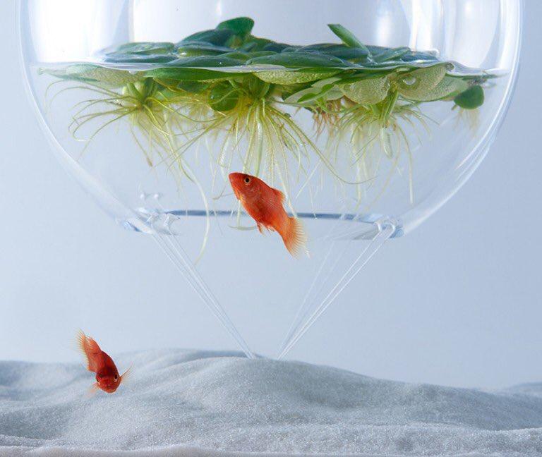 こんな水槽があったら、絶対に金魚を飼いたくなる...そんな水槽がこれっwww