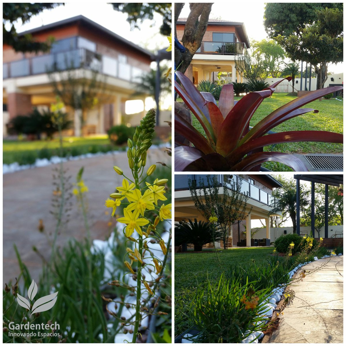 Gardentech On Twitter Caminero Con Bulbines Cycas Bromelias