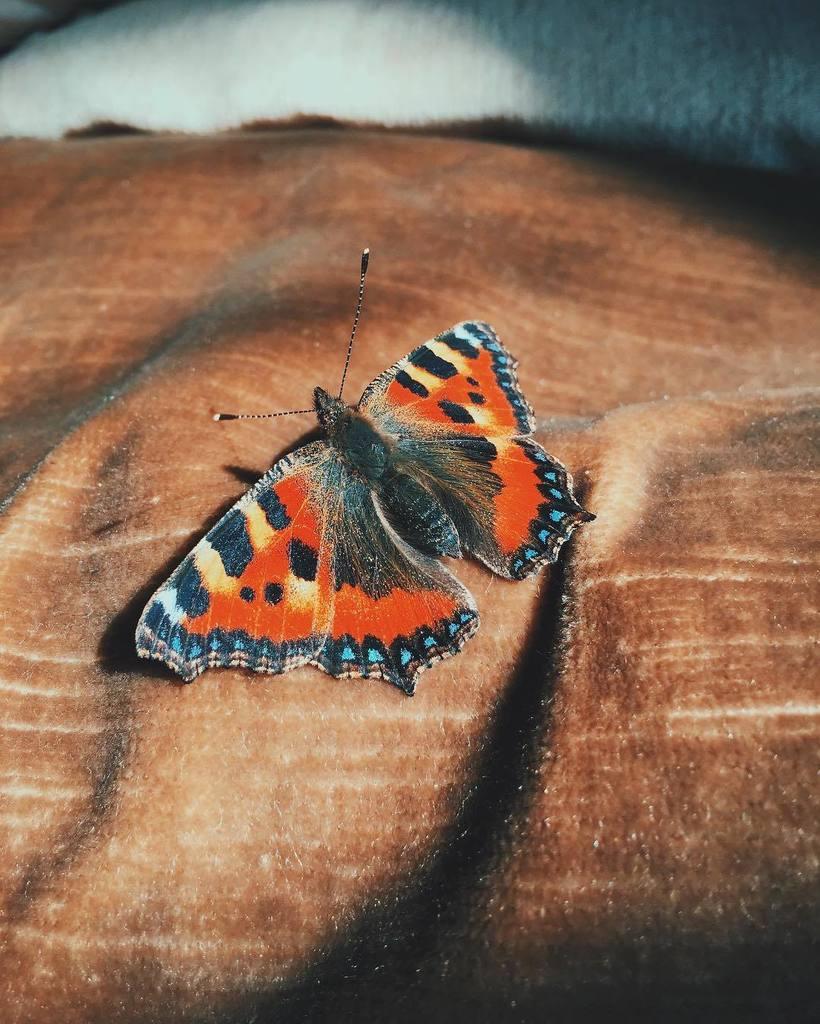 Small Moths In Bedroom Joe Barefoot Joebarefoot Twitter