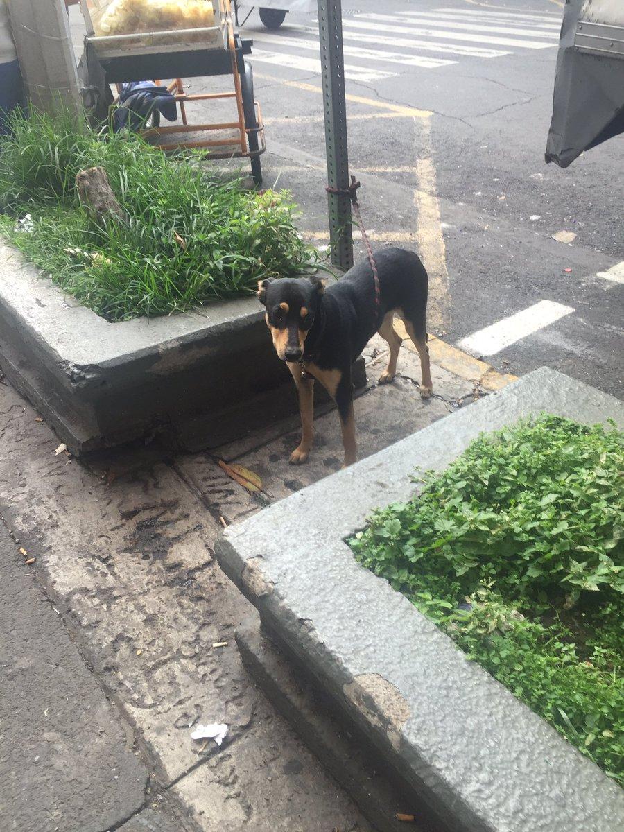 Este perrito está perdido y lo amarraron aquí en la esquina de Colima y Mérida en la Roma. Please RT. https://t.co/WshfPYWJW1