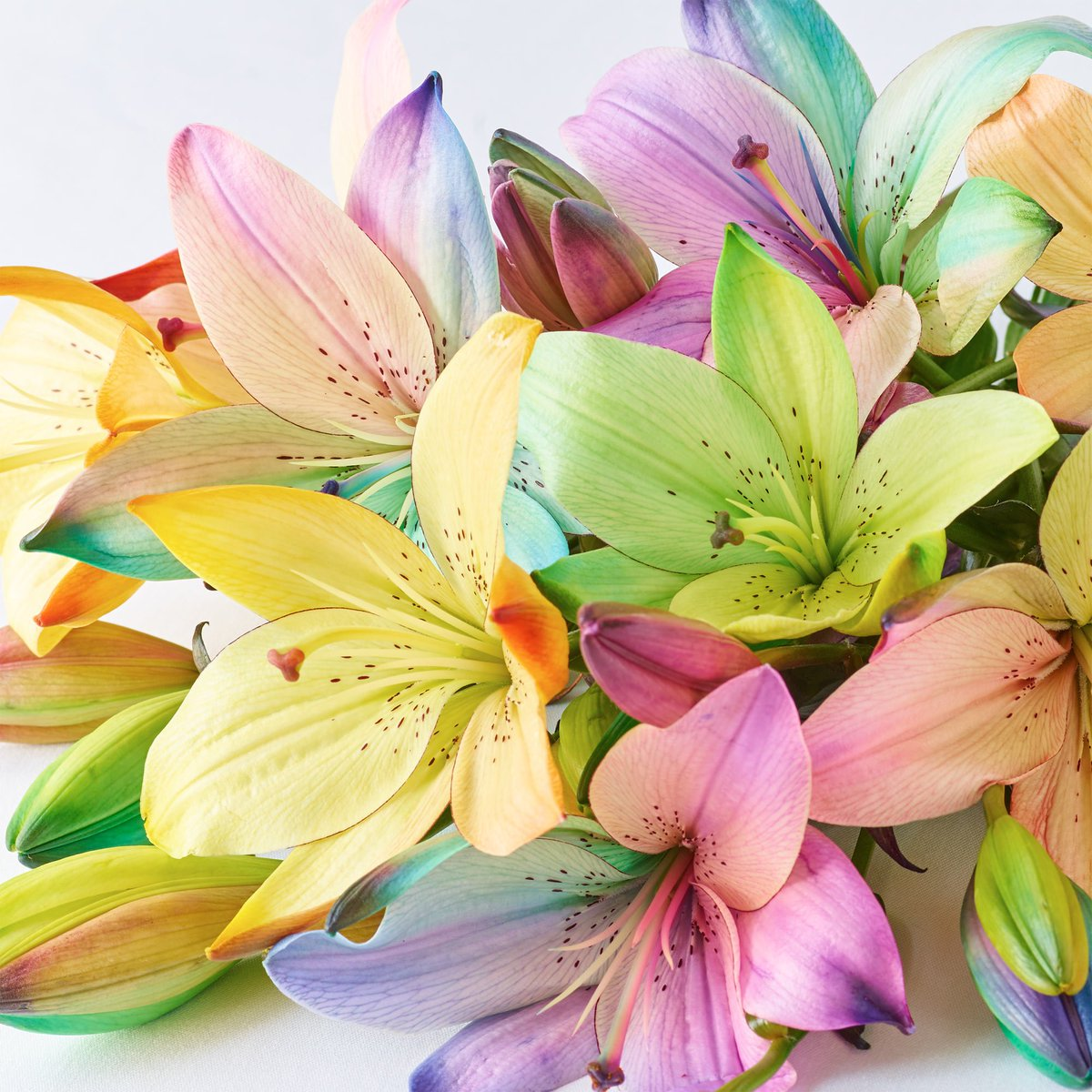 Interflora On Twitter How Many Likes For Our Dazzling Rainbow