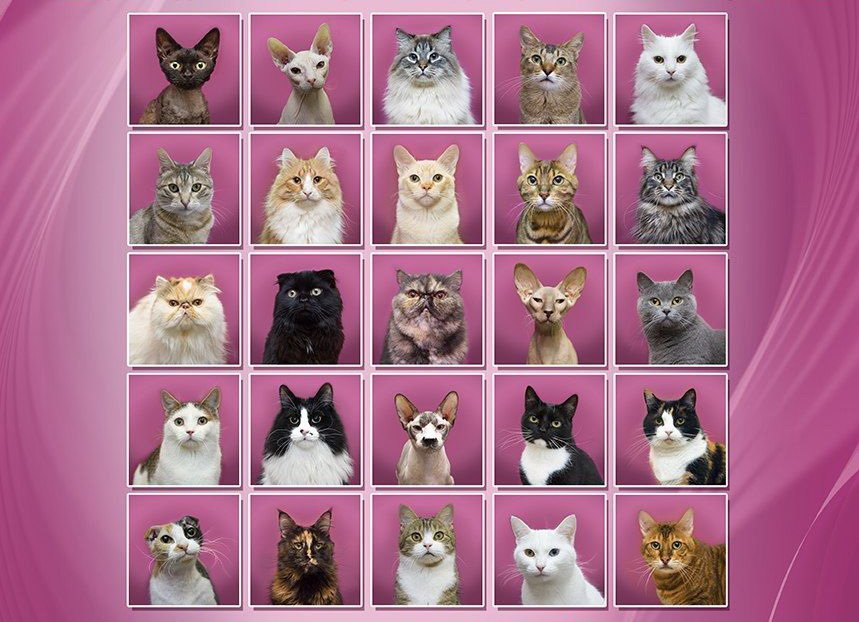 Картинки по запросу республика кошек выборы