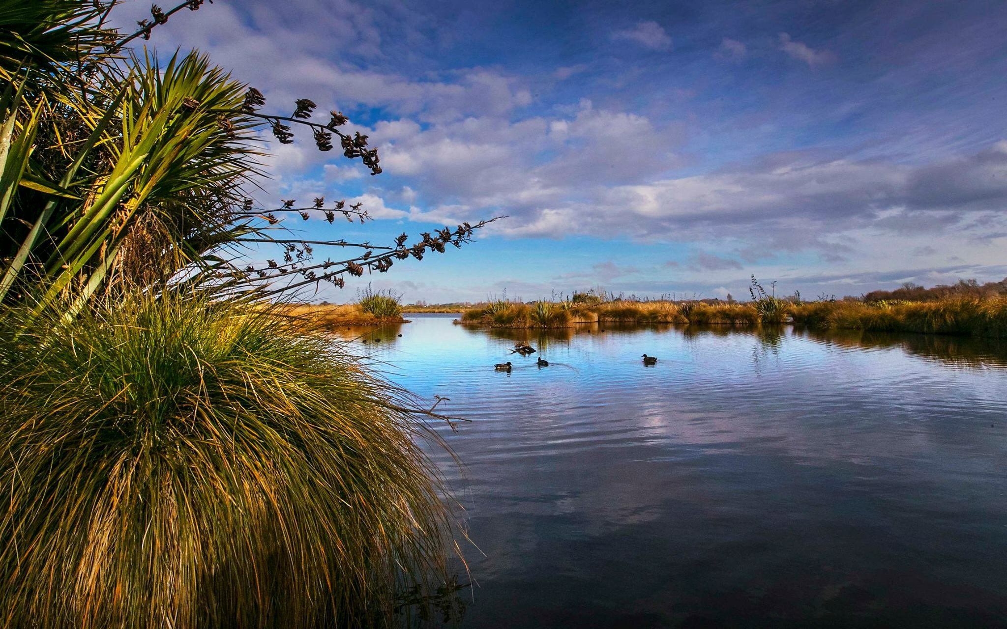 The Travis Wetlands are a great spot for #ConservationWeek and a #KiwiGuardians adventure https://t.co/UB2LJ6SSlF https://t.co/6BLQRU2GdU