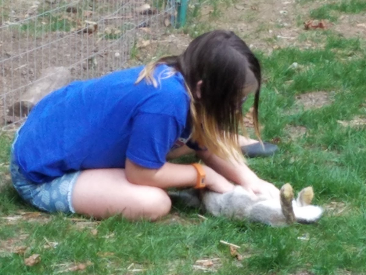 Olivia sexing bunnies. Lots of #does she says. #farming #teaching #rabbits #bunnies #Americanchinchilla pic.twitter.com/SFhGDNI39Y