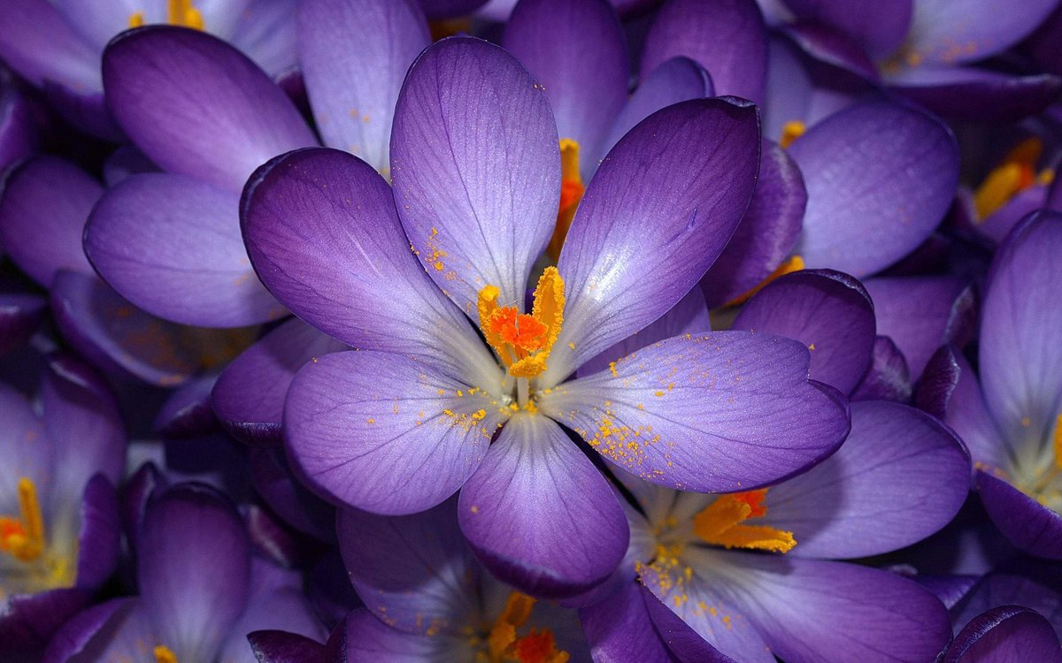 World Love Flowers On Twitter Loveflowers Fact About Flowers The