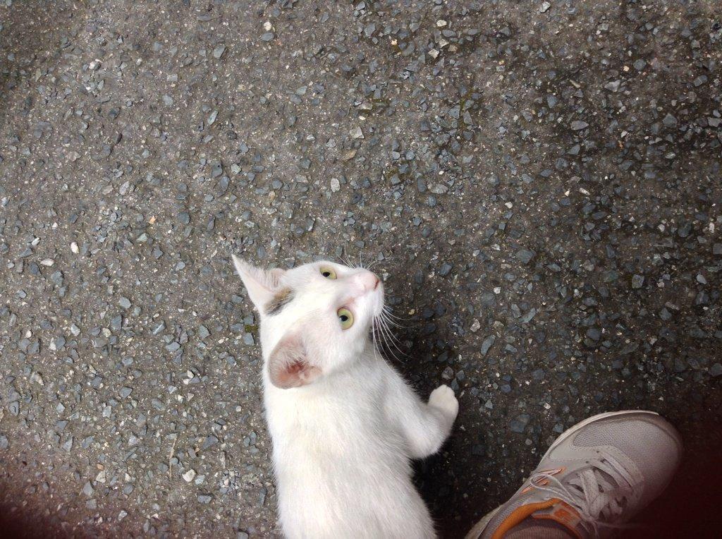 【拡散願い】猫の里親募集中。 佐賀県佐賀市に猫は居ます。なつこくてよくなきます。 寂しがり屋で時間をかけると人間好きな外猫です。 この夏の猛暑は乗り切れました。この冬はとっっても寒いそうです。是非、暖かい部屋と家族にご縁を下さい https://t.co/3euUr3UEH2