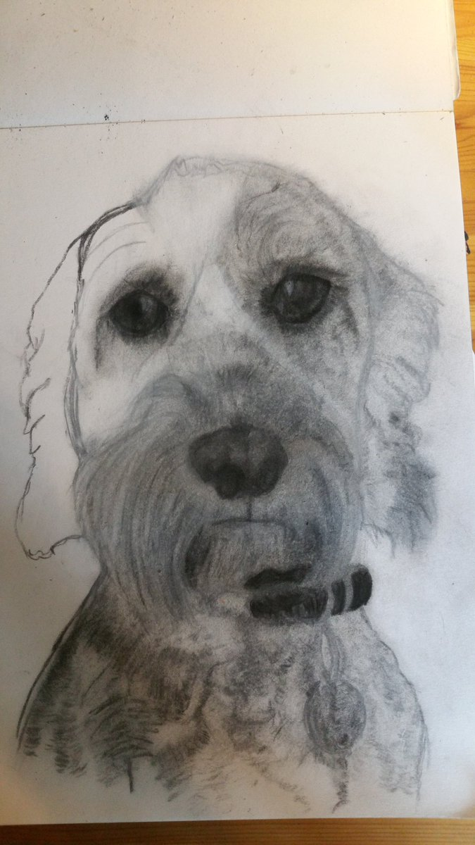 Helen Richards On Twitter Pet Portrait Drawing Dog Art Fur