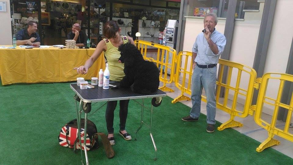 Valentina di #EVADOG è impegnata in una piacevole #toeletta ad un simpatico #barboncino . Curiosi? Vi aspettiamo! https://t.co/KVN9ieKEUB