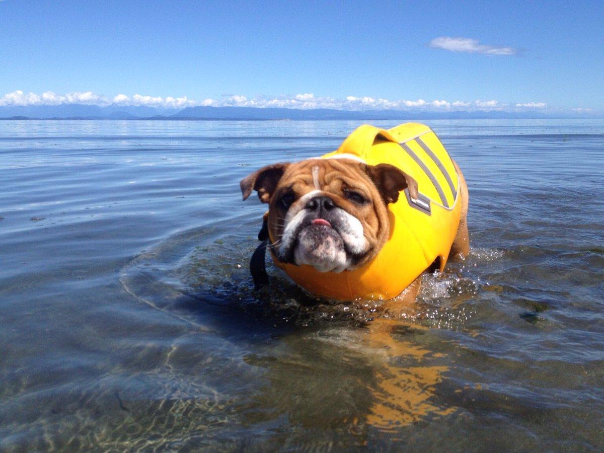 georgia bulldog on twitter sunday sea pawtrol georgia bulldog