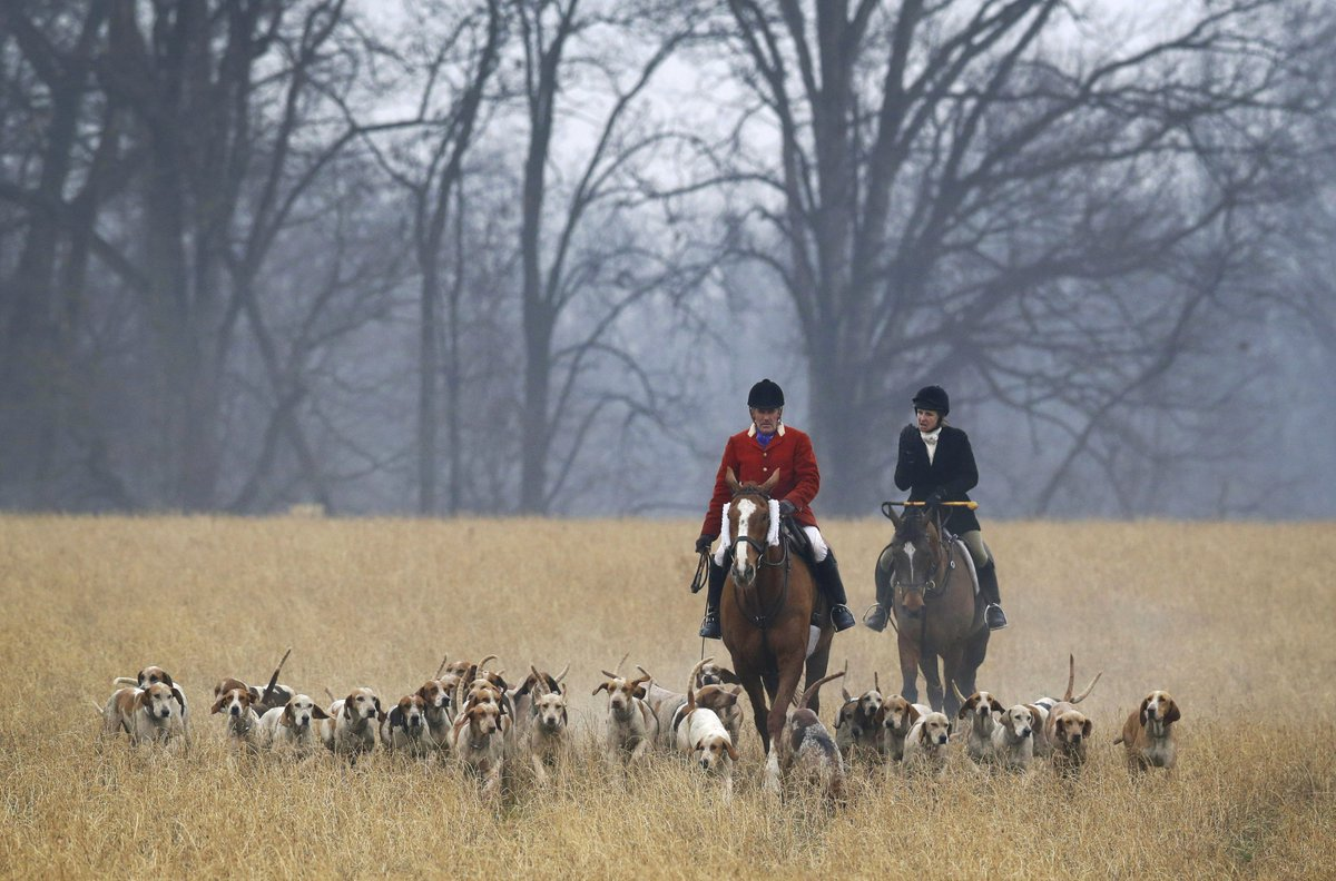 should foxhunting be banned in britain