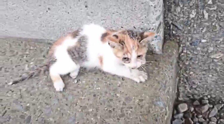 【ねこ動画】橋から落ちた半身付随の保護子猫と先住猫の奇跡の1年