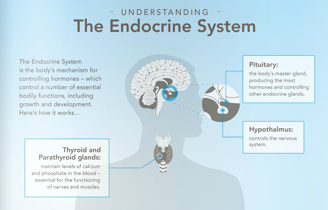 Ecpa On Twitter Get The Basics On The Endocrine System Edcs
