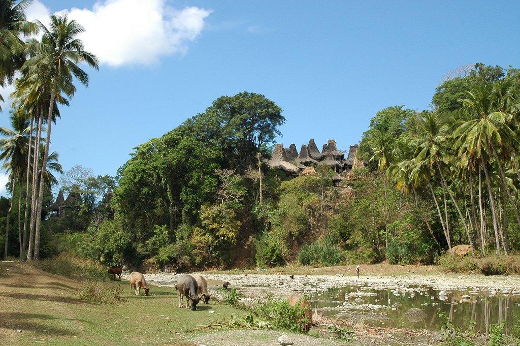 Lamboya Landscape, Komodo - Indonesia Sumber: flickr.com/photos/whltrav…
