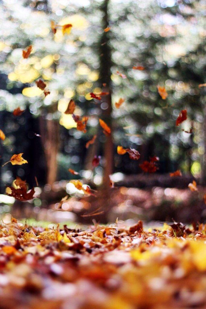 automne Ct0ZwBUWIAEPEtY