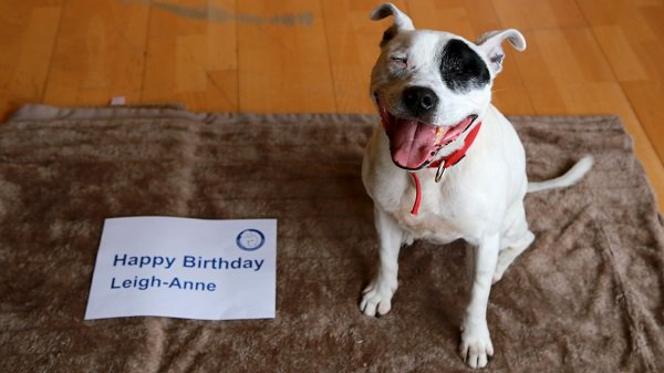 Happy Birthday @LittleMix Leigh-Anne - we hope you have a super stylish day! From all of your friends here @BDCH