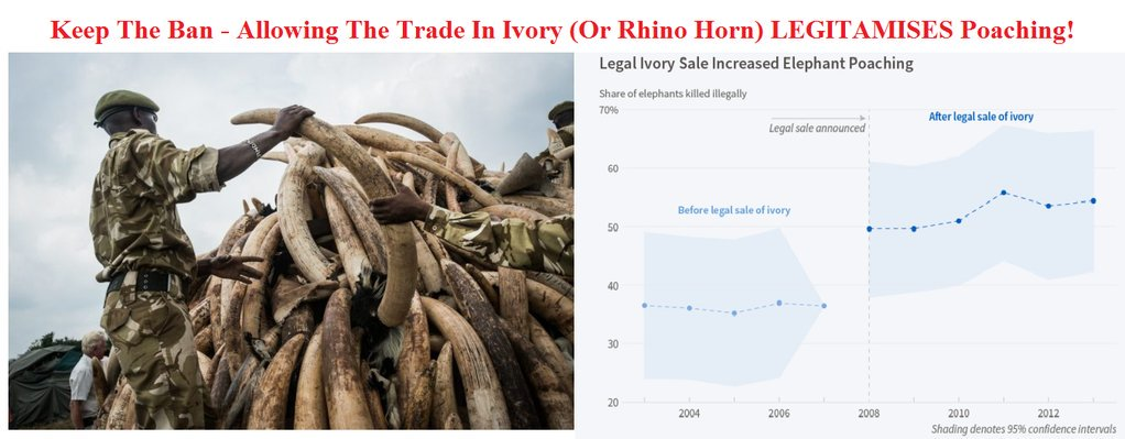 the illegal and legal process of elephant poaching At current poaching levels, the african elephant doesn't have that tons of ivory through his shop to discredit the notion that legal and illegal ivory markets.