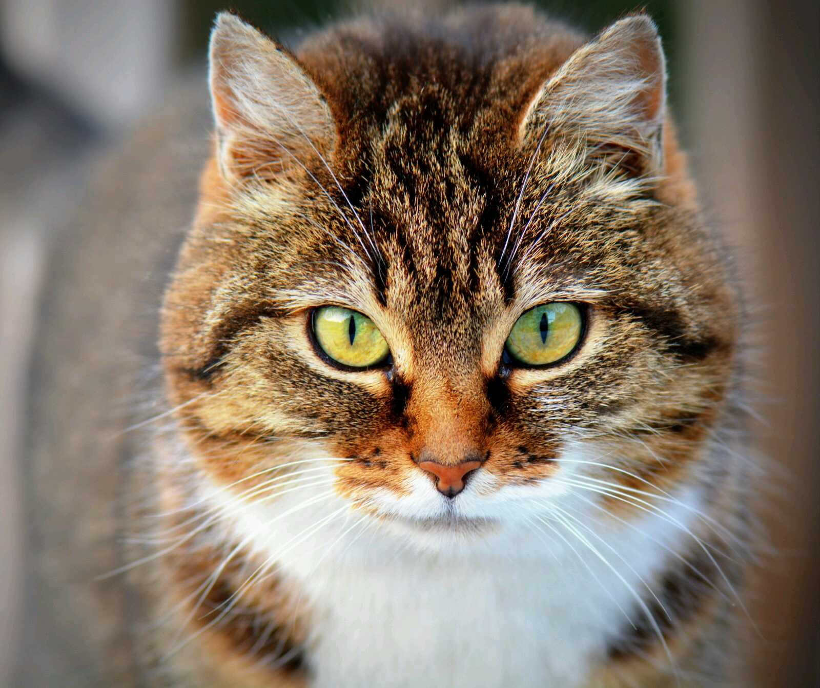 Про котов картинки, юбилеем