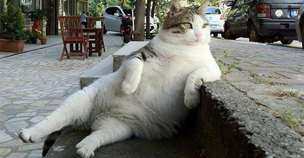 Facebook Statua Per Tombili Il Gatto Più Rilassato Del Mondo Post