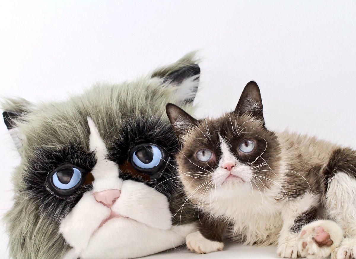the worlds grumpiest cat! grumpy cat
