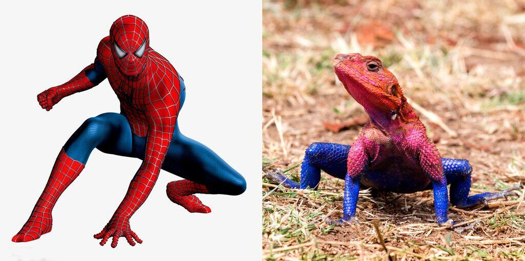 spiderman vs  u0026quot lizard man u0026quot   reptile that resembles comic