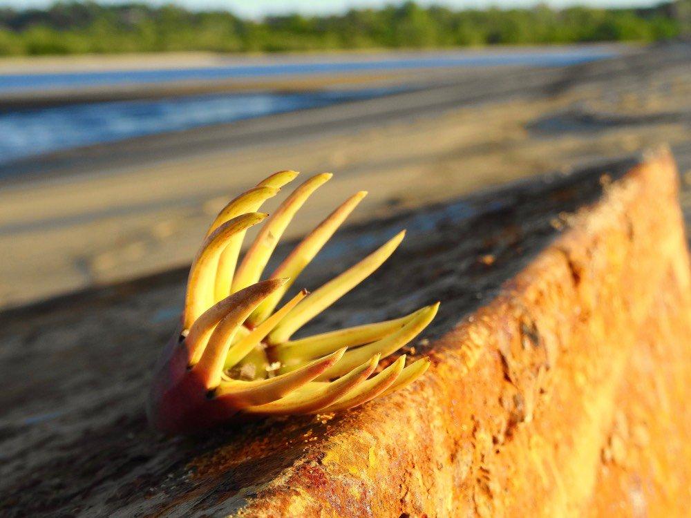 tropicalmardi photo
