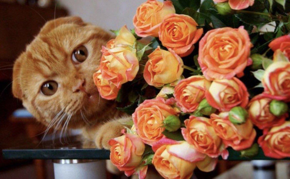 итог выводится красивые цветы для оли фото сделал