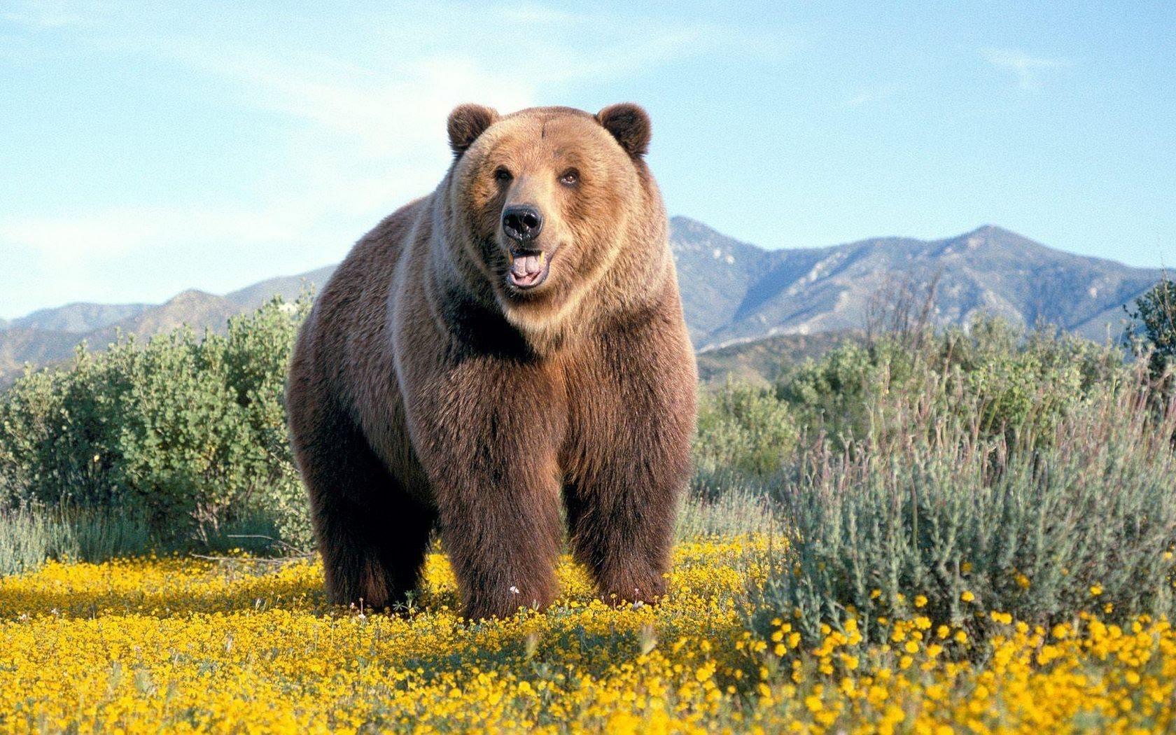 Уютного вечера, медведь все будет хорошо картинка с надписью