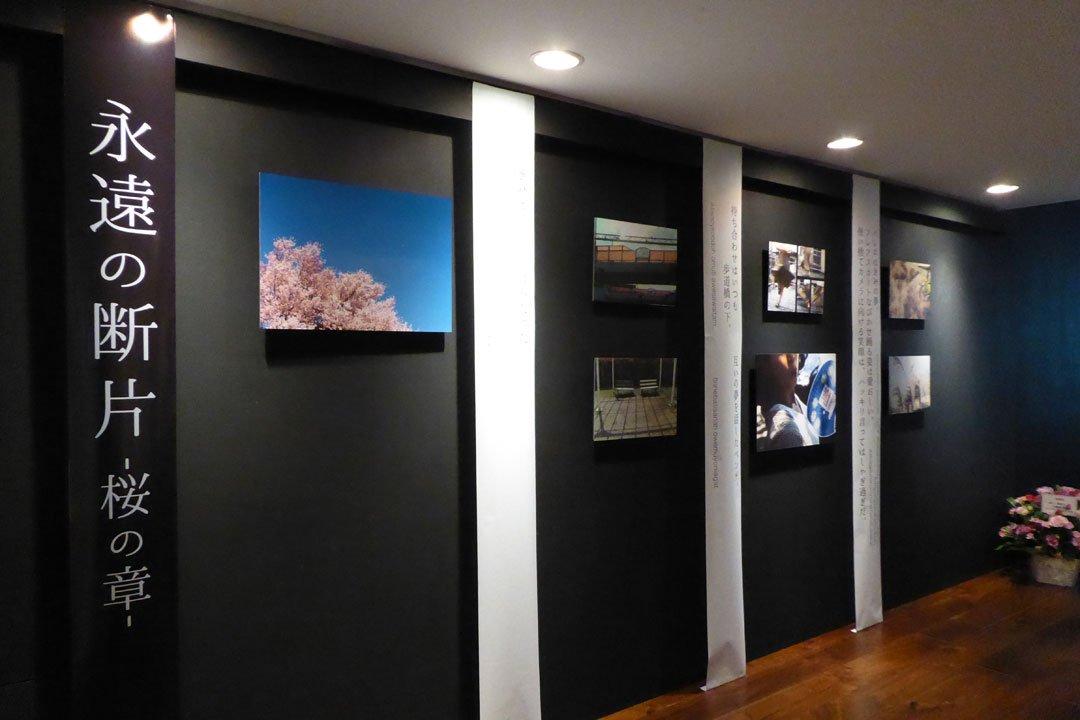Photoexhibition 永遠の断片-桜の章(「eggs」中央区銀座5-11-13ニュー東京ビル9F)