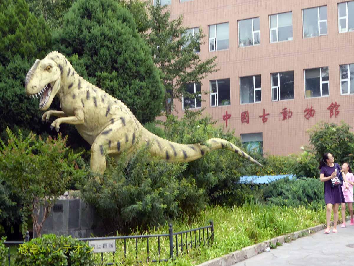 """টুইটারে パンテオン: """"#金曜日だから化石貼る 中国古動物館 ..."""