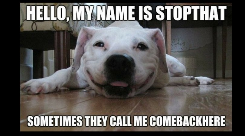 10 Reasons Why Having a Dumb AF #Dog is Awesome! https://t.co/A0nz8IU3QU https://t.co/DiaazvWIzd