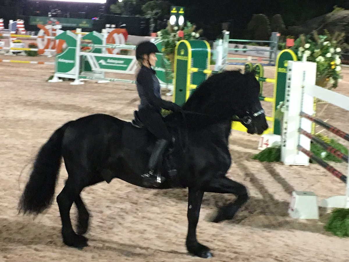 Owners Concierge On Twitter Frederick The World S Most Beautiful Horse At The Central Park Horse Show Tobahorses Chronofhorse