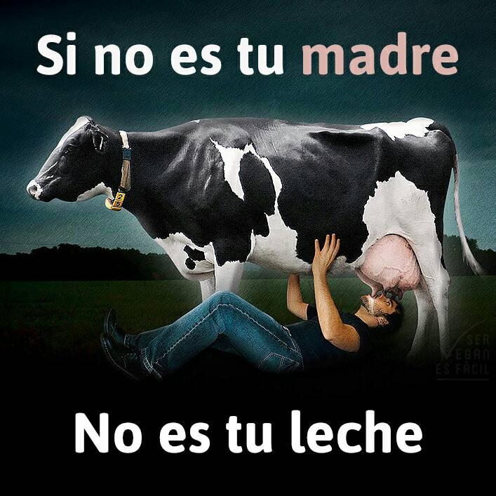 Si no es tu madre, no es tu leche: Los mamíferos producen leche para sus crías únicamente.