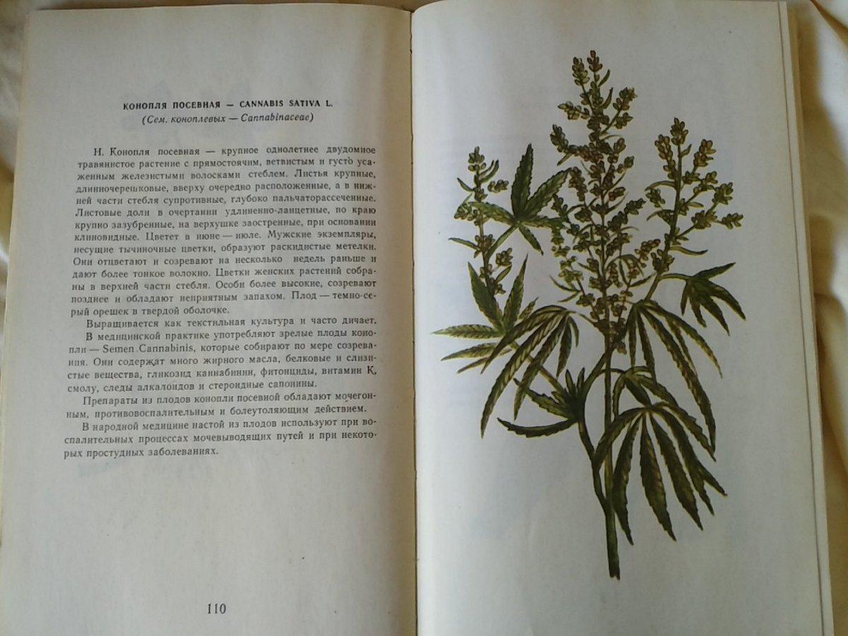 О русски книга марихуане по будет марихуаны 11 грамм что за