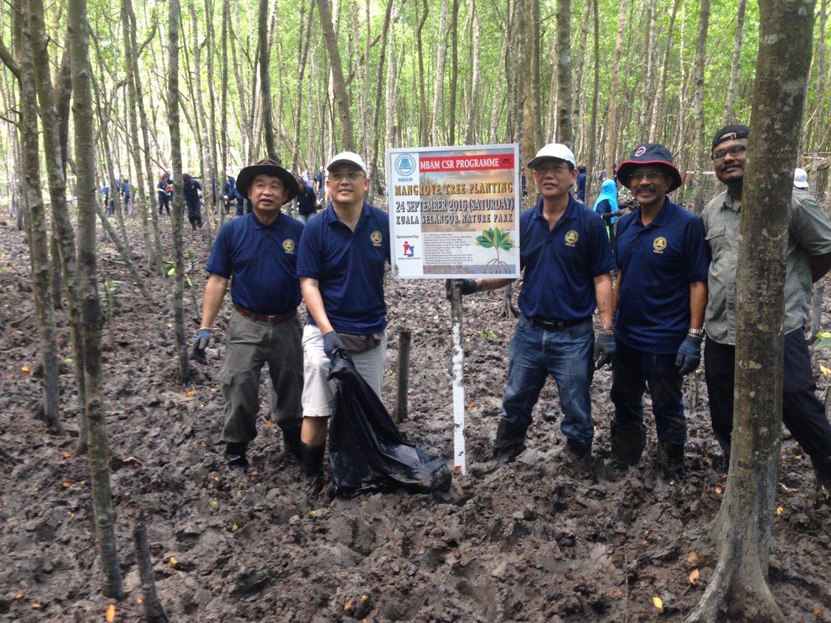 Bernama On Twitter Anggota Persatuan Kontraktor Binaan M Sia Tanam 350 Pokok Bakau Di Taman Alam Kuala Selangor Menerusi Program Csr Persatuan Itu Https T Co Fsgrzrx37m