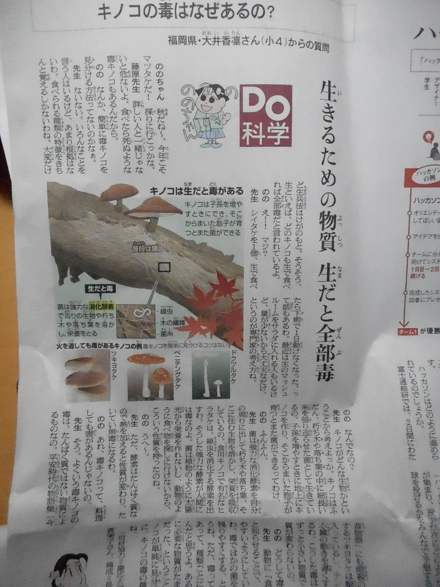 今日の朝日新聞別刷り、ののちゃんがきのこの毒について教わってる。きのこを生で食べちゃいけない理由も解説してくれてるよ。 https://t.co/2vD7hpXgga