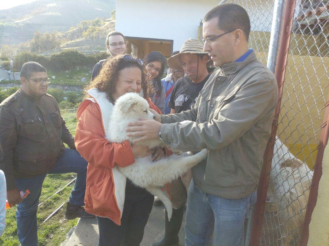 Misión Nevado desarrolla Programa de Preservación y Rescate de la Raza Mucuchíes