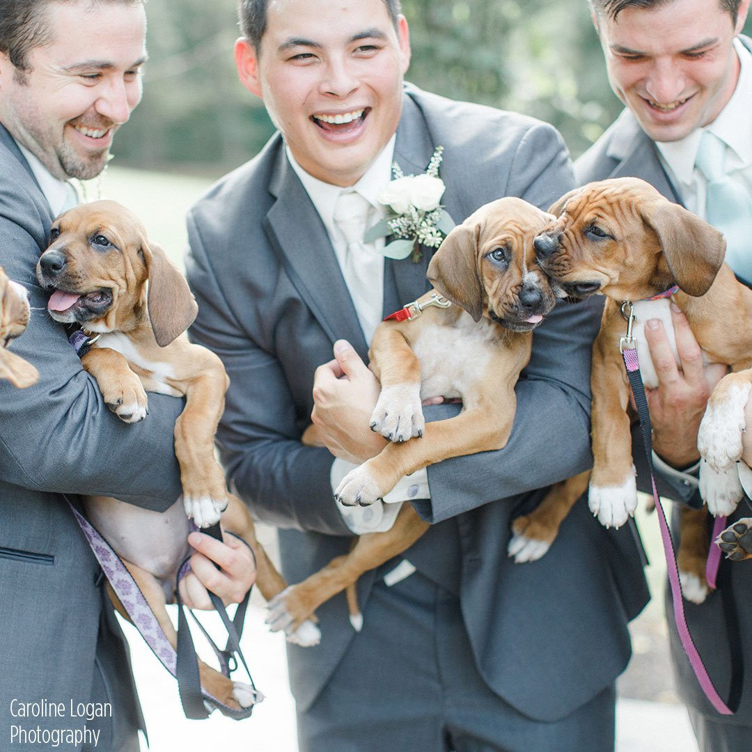 Best wedding photo shoot idea ever? Bridal party poses with rescue puppies