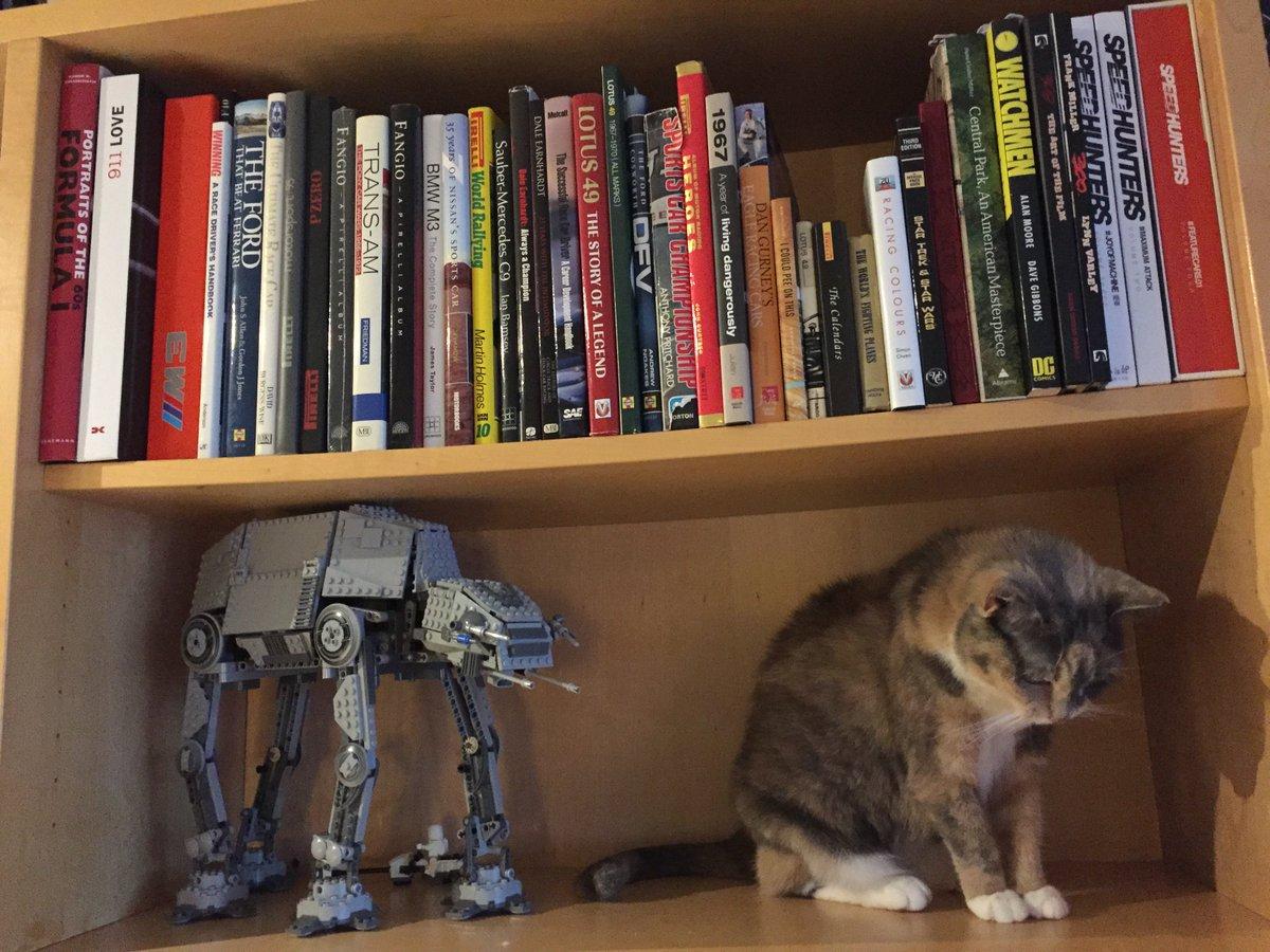 CAT-CAT https://t.co/KD7DSkzD1V