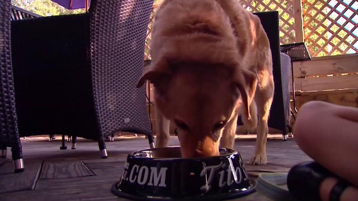 An Indiana restaurant has unveiled a gourmet menu geared toward canine customers.