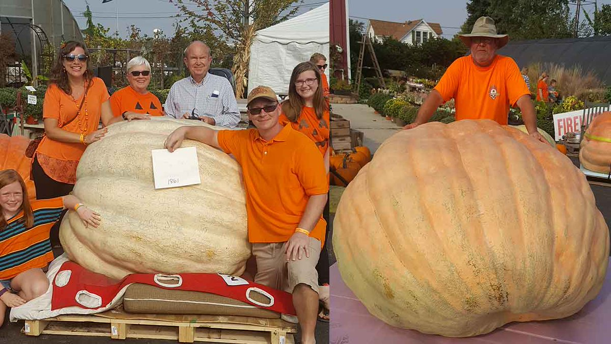 Big, fat pumpkins compete in Midwest weigh-off