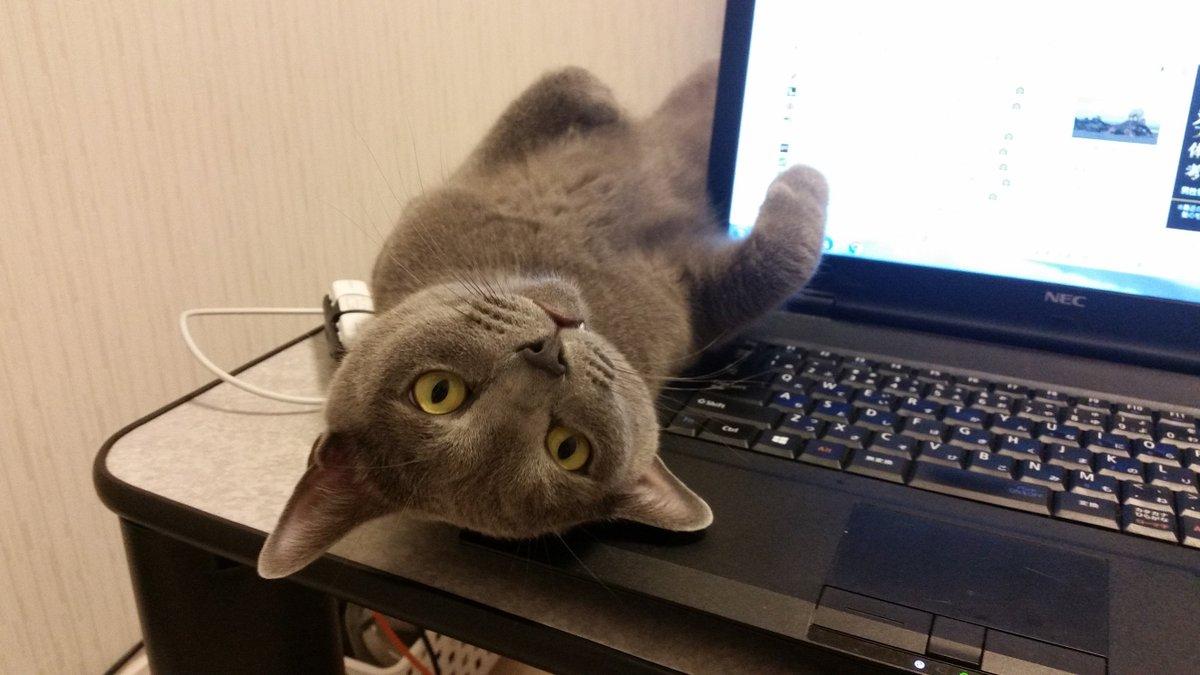 今日もまた、パソコン邪魔妖怪が、殺気を放った目でこちらを見ている。 パソコンに手を伸ばした瞬間に攻撃…