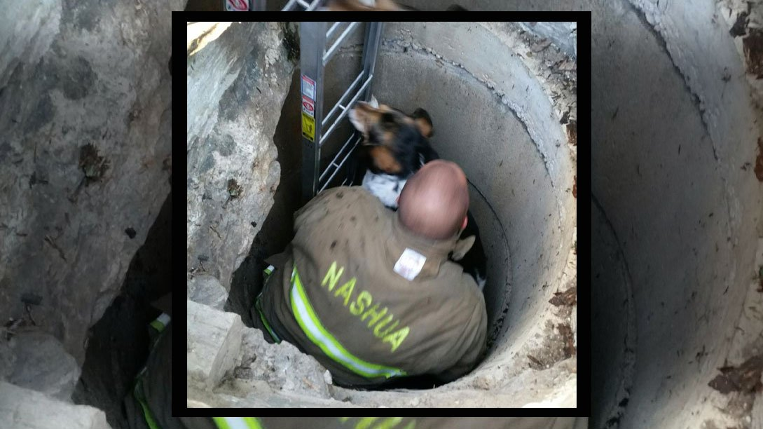 Awesome! Nashua firefighters rescue dog after fall into abandoned well