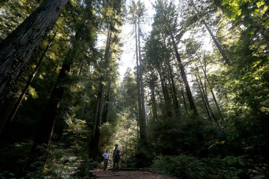 Redwood forest near Silicon Valley with rich history to be opened to public @PaulRogersSJMN