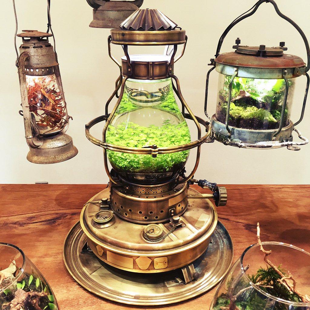 京都府立植物園の水草展見に行ってきた!!前にTwitterで加藤水槽さんのランプの水槽を見て一目惚れしたのだけどもまさか京都で見れるとは!!と興奮✨お話も聞けてよかった〜