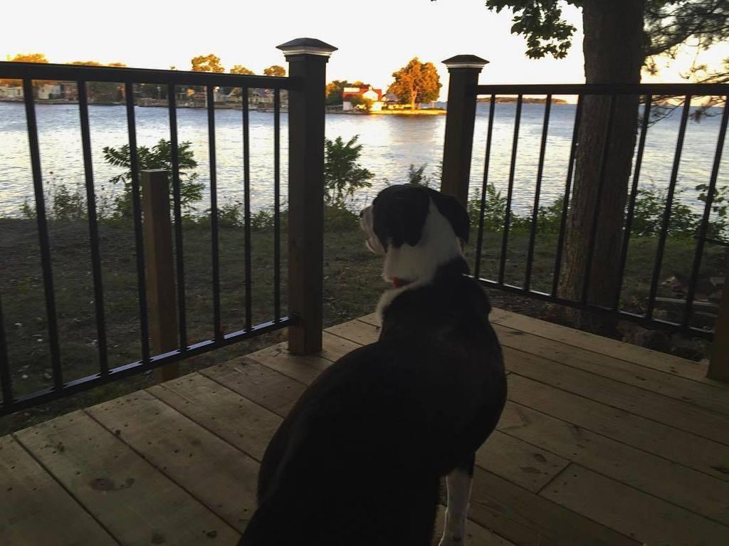 Newton is enjoying the sunrise from the new deck! #stonelab #putinbay#goodmorning #dogsofi… https://t.co/CafZa9w9Bh https://t.co/Krf25H9Hwn