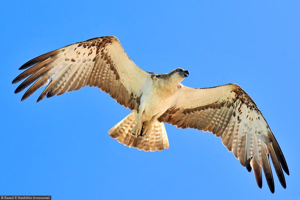 Картинка человек летит на птице скажешь