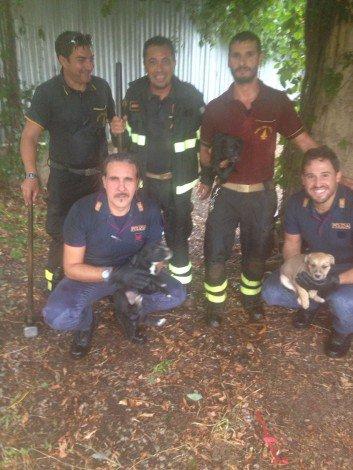 Tre cuccioli di pit bull salvati da pompieri e poliziotti, erano ... - https://t.co/CBLGkEbVyA #blogsicilianotizie