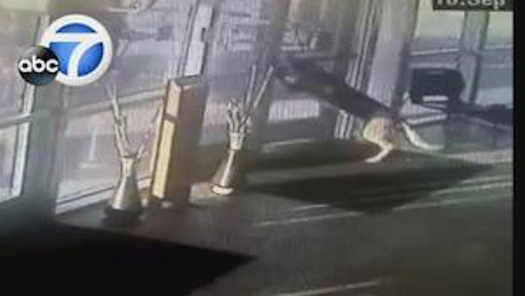 German shepherd's great escape from shelter caught on video